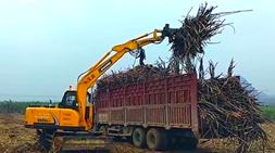 广西甘蔗榨季的轮式抓甘蔗机推荐选择-宝鼎轮式挖掘机抓木机推荐