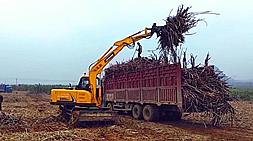 新款抓木机实力派代表-宝鼎BD95W-9轮式抓木机广西工作展示