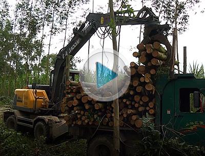 宝鼎BD95W-9A抓木机广西地区装卸桉树工作视频报告