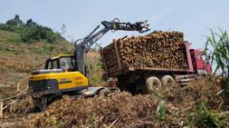 广西广东地区宝鼎抓木机市场占有率持续攀升