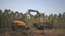 宝鼎轮式抓木机厂家的优势