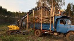 第五代宝鼎95轮式抓木机实力威震八方