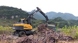 桉树种植受阻,广西广东轮式抓木机车主何去何从?