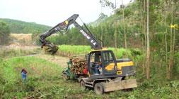 宝鼎抓木机厂家遍地开花,国内抓木机市场分布均匀