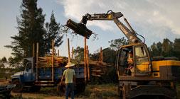 宝鼎轮式抓木机95A型号升级后故障率低至冰点