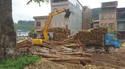 广西市场下的宝鼎抓木机车型动态