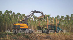 分期月供也要购买的轮式抓木机车型